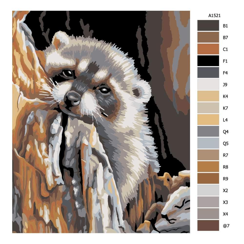 Návod pro malování podle čísel Pohled mývala