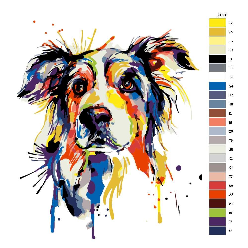 Návod pro malování podle čísel Border kolie v barvách