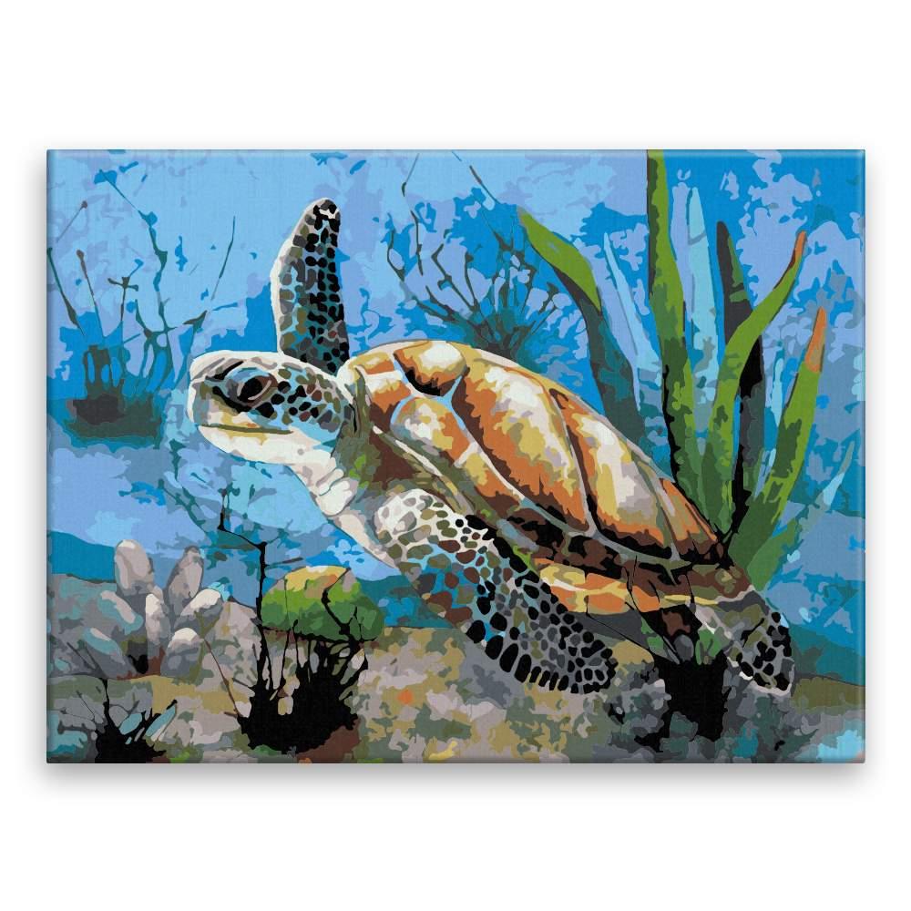 Malování podle čísel Mořská želva